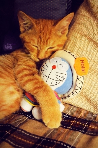 Yang sayang doraemon comment yah, kucing aja sayang sama doraemon, kamu?